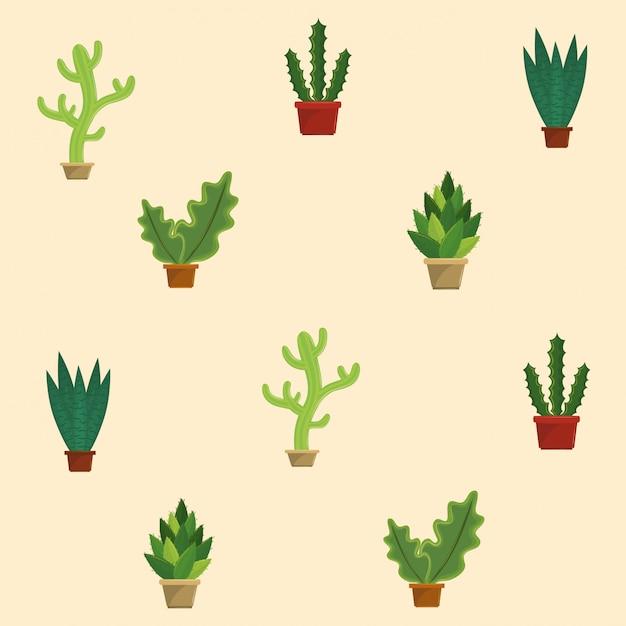 Cactus succulent plants pots Premium Vector