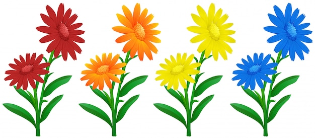 Calendula flowers in four colors Free Vector