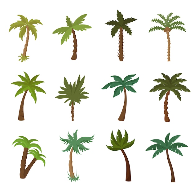 California palm trees. summer tropical plant vector set Premium Vector