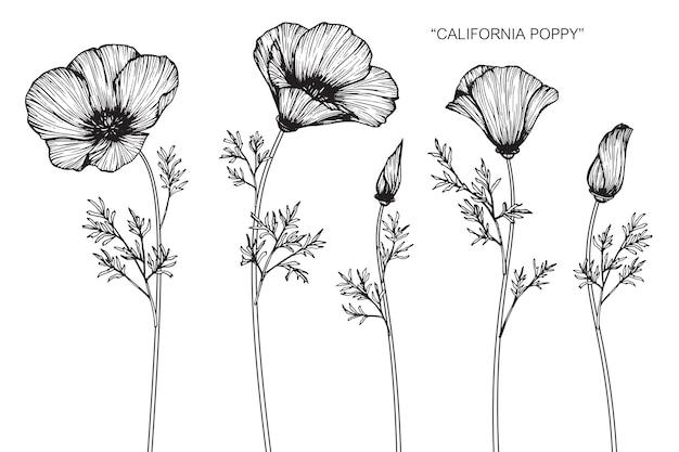 California poppy flower drawing illustration vector premium download california poppy flower drawing illustration premium vector mightylinksfo