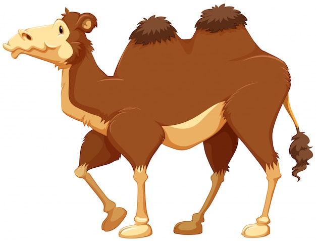 Camel Free Vector