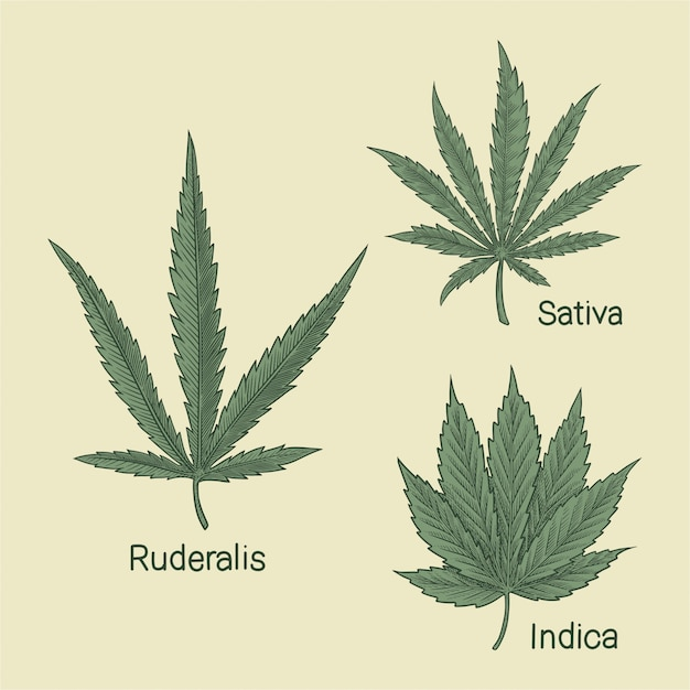 大麻の種類 Premiumベクター