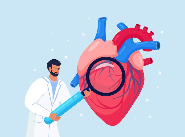 Cardiology. check up of heart health and cardiovascular pressure. cardiologist studying human organ with magnifying glass. circulatory system complications, ischemic heart, coronary artery disease Premium Vector