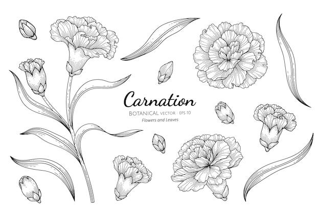 カーネーションの花と葉の植物の手描きイラスト。 Premiumベクター