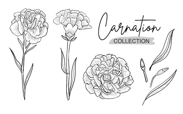 Carnation flower ink h drawing line art for wedding ornament Premium Vector