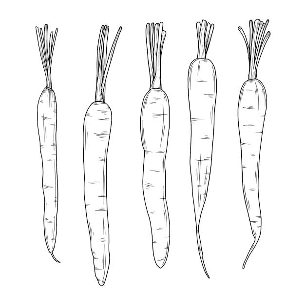 Морковь на белом фоне. иллюстрация в стиле эскиза. Premium векторы