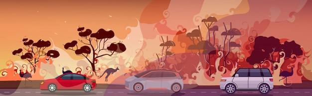 Автомобили и животные, спасающиеся от лесных пожаров в австралии лесной пожар лесной пожар горящие деревья концепция эвакуации стихийных бедствий интенсивное оранжевое пламя горизонтальное Premium векторы