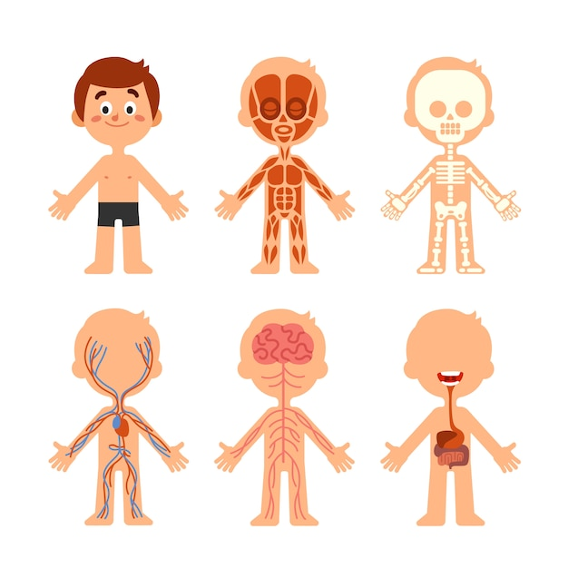 Cartoon boy body anatomy Premium Vector