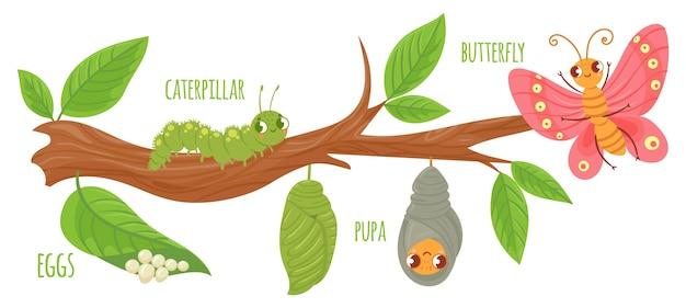 Жизненный цикл бабочки мультфильм Premium векторы