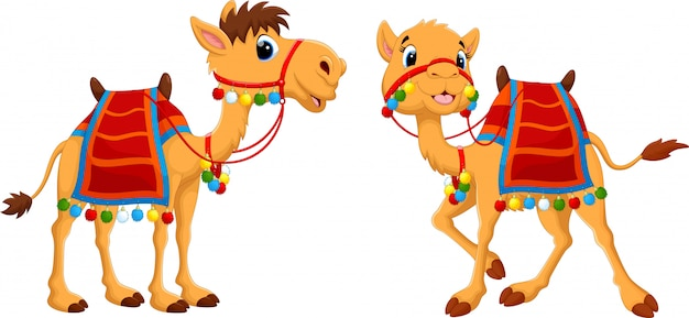 Cartoon camels with saddlery Premium Vector