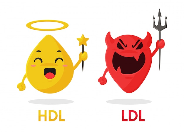 Cartoon cholesterol, hdl and ldl components are good fats and bad fats from food. Premium Vector