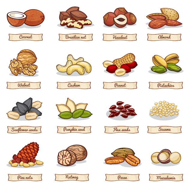 Cartoon color nut and seed grains. vector collection Premium Vector