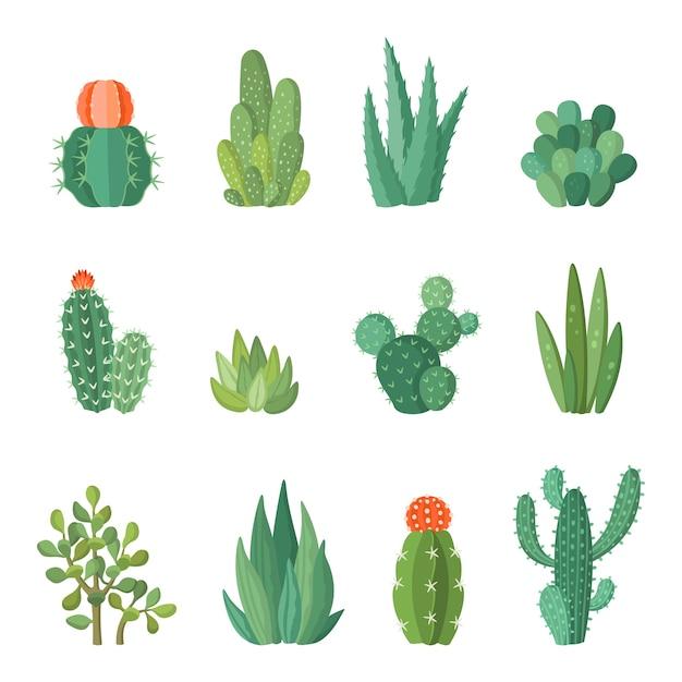 漫画のカラフルなサボテンと多肉植物の漫画セット。落葉性の花や植物。孤立したアイコンの図 Premiumベクター