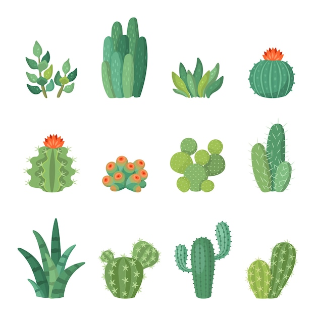 Мультяшный красочный набор кактусов и суккулентов, цветы и растения. изолированная иллюстрация Premium векторы