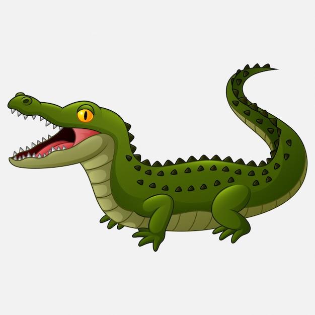Cartoon crocodile isolated on white background Premium Vector