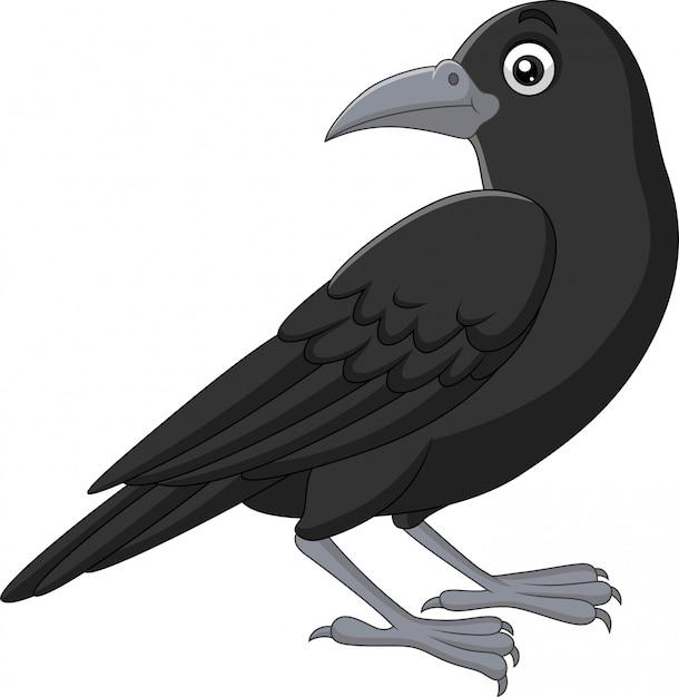 Cartoon crow isolated on white Premium Vector