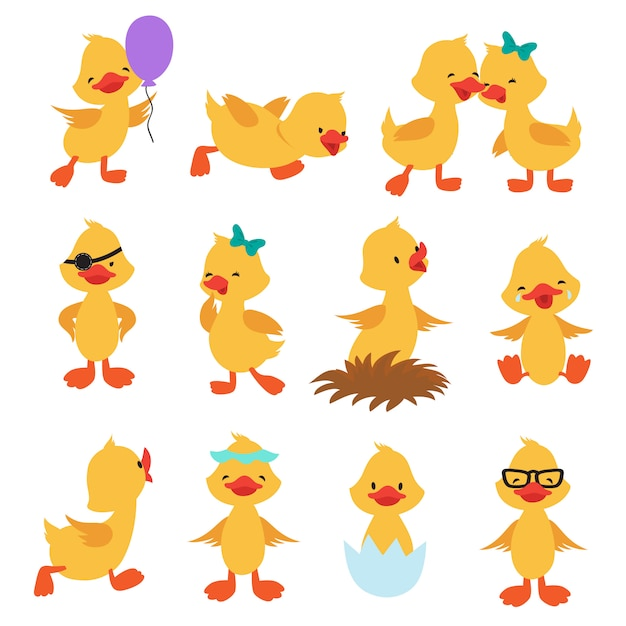 Cartoon cute ducks. little baby yellow chick  isolated characters Premium Vector