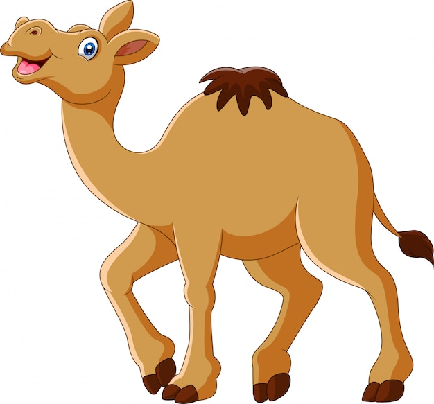 Cartoon funny camel smile and standing Premium Vector