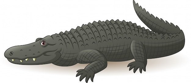 Cartoon grey alligator isolated on white Premium Vector