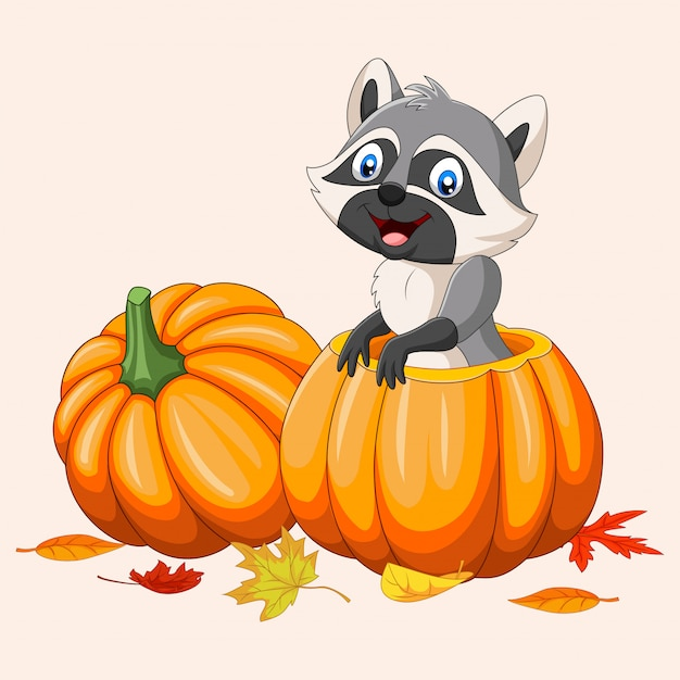 Cartoon happy raccoon in pumpkin basket Premium Vector