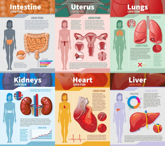 Cartoon human internal organs infographic template Free Vector