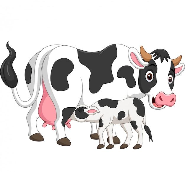 Cartoon mother cow feeding baby calf Premium Vector