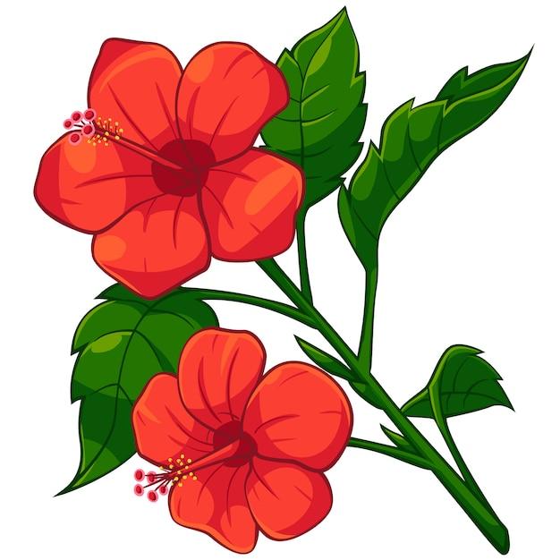 cartoon of red hibiscus vector premium download rh freepik com hibiscus canada hibiscus candle holder