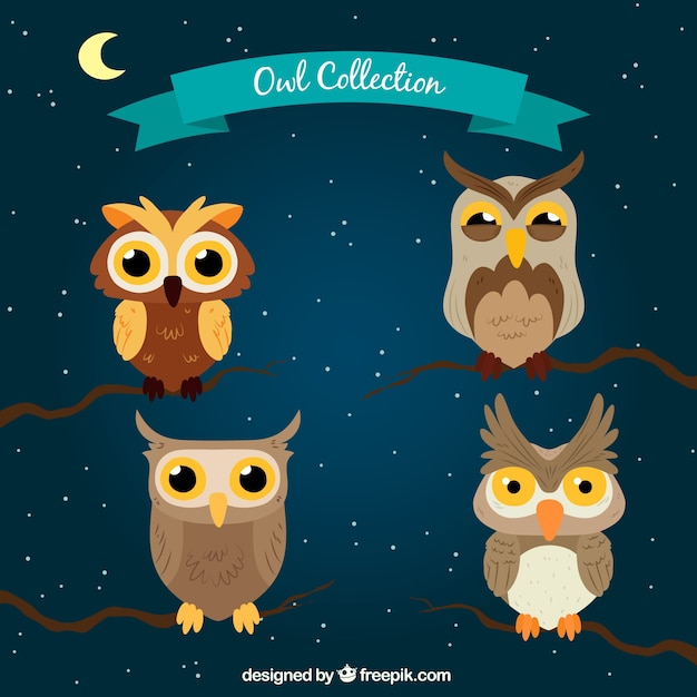 Cartoon owl collection at night
