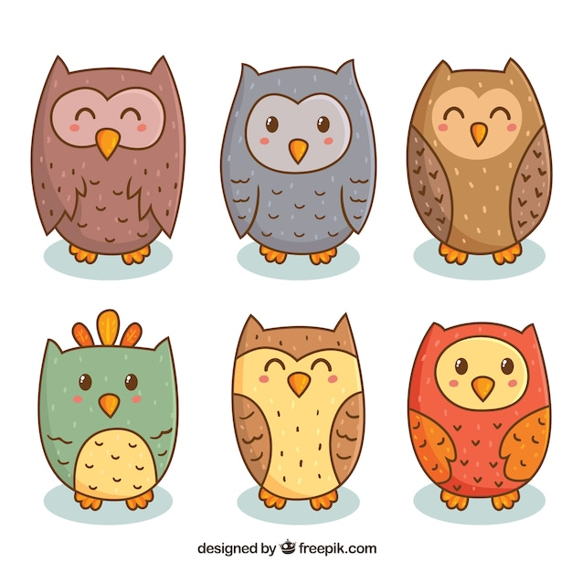 Cartoon owl collection of six