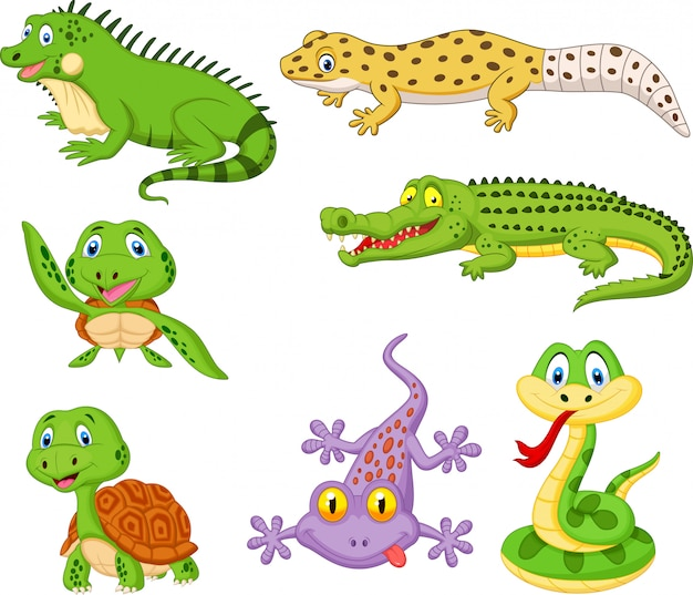 Cartoon reptiles and amphibians collection set Premium Vector