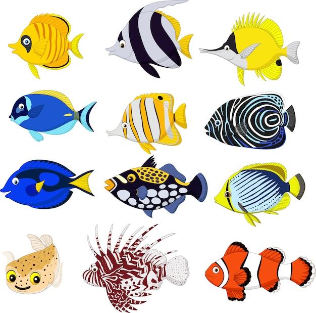 Cartoon tropical fish collection set Premium Vector
