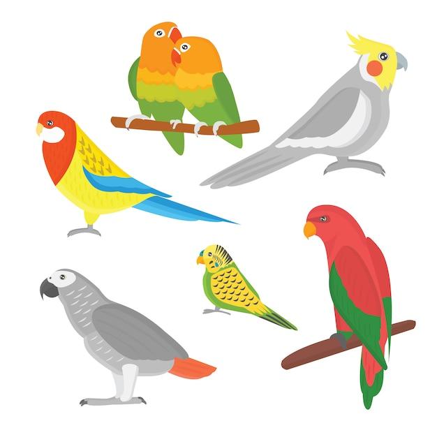 Cartoon tropical parrot wild animal bird vector illustration. Premium Vector