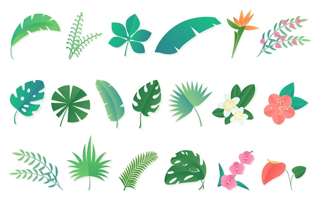 Premium Vector Cartoon Tropical Rainforest Leaves And Flowers Set Learn how plants and animals are specialized for life in tropical rainforests. https www freepik com profile preagreement getstarted 10976732