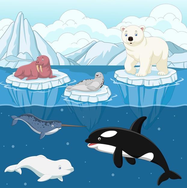 Cartoon wild arctic animal on north pole Premium Vector