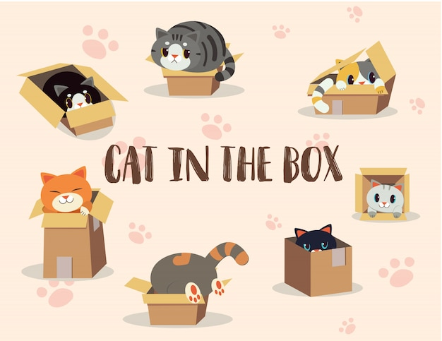 Cat in the box set Premium Vector