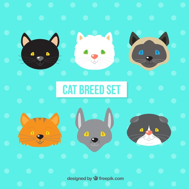 Cat breed avatars set