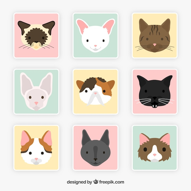 Cat breed avatars