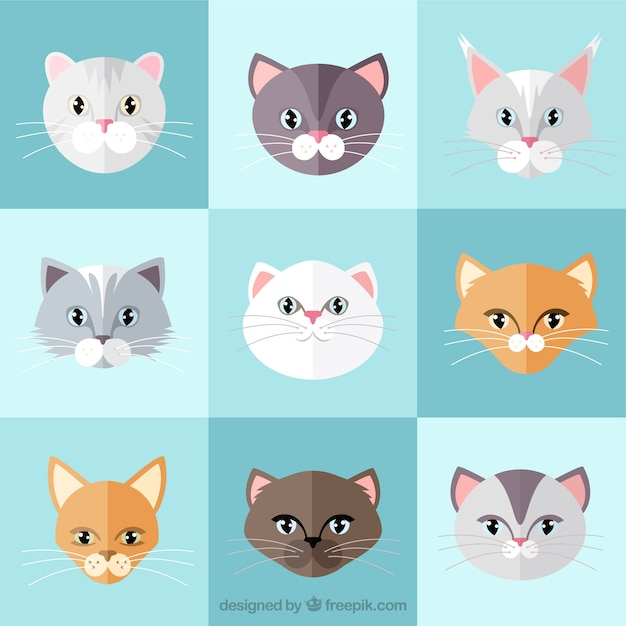 cat breed flat collection vector free download