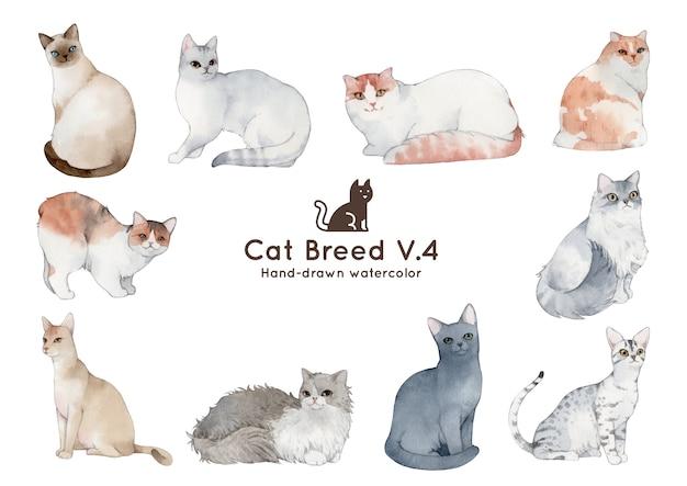 Cat breed watercolor illustration Premium Vector