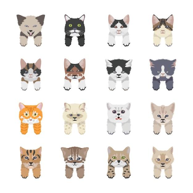 Cat breeds icons Premium Vector