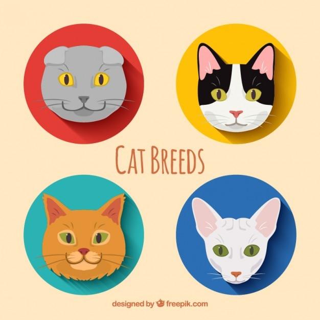 Cat breeds pack