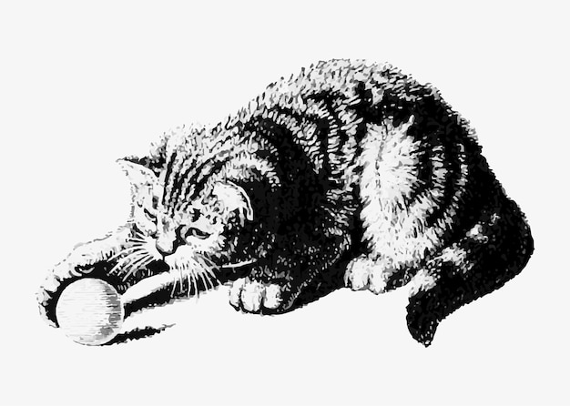 Cat playing with a ball Free Vector