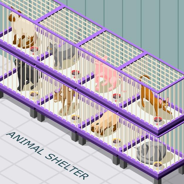 Кошачий приют изометрические Бесплатные векторы