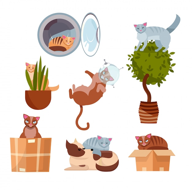 Cats in funny places: in a box, in a washing machine, on a room flower, in a pot, in space, sleeping on dog. Premium Vector