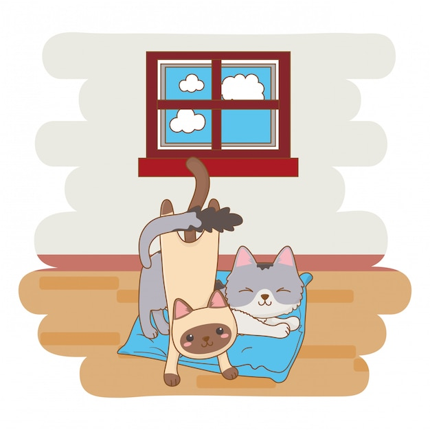 Cats playing in interior home Premium Vector