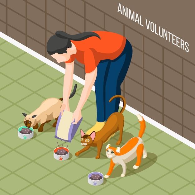 Кошки волонтер изометрические Бесплатные векторы