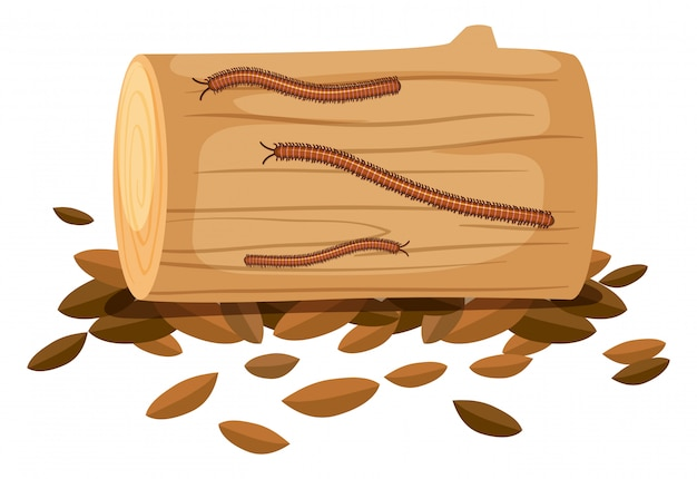 Centipede on wood on white background Free Vector