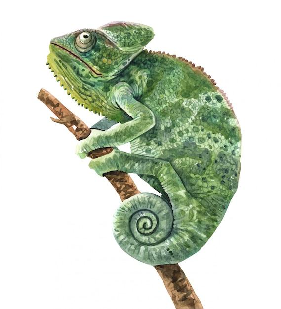 Chameleon watercolor illustration for printing. Premium Vector