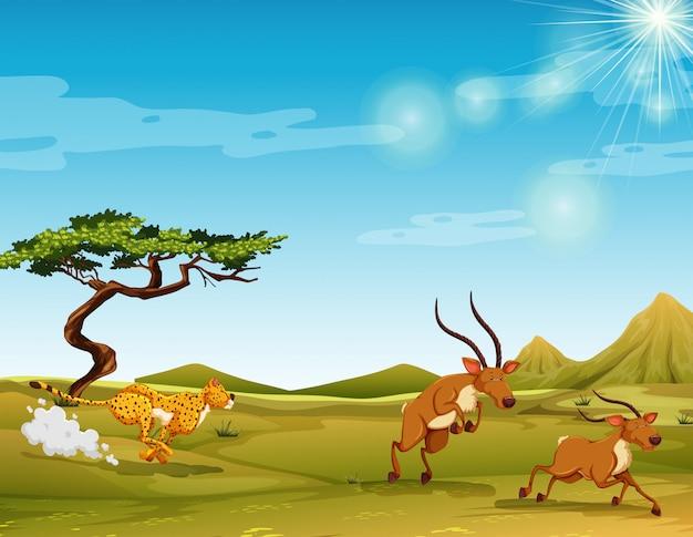 Cheetah chasing deers in the savanna Free Vector