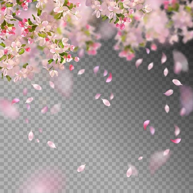 Вишневый цвет и летающие лепестки на весеннем фоне Premium векторы